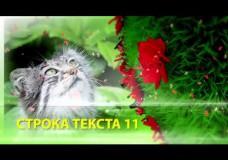 Видеоролик «Природа»